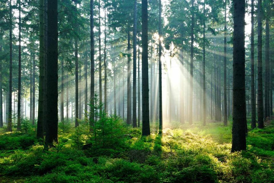 fortrollande_skog_large1-960x640