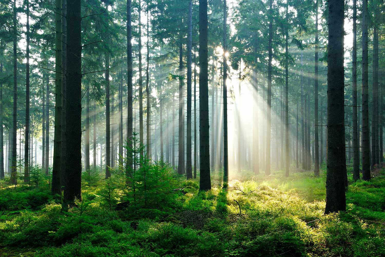 fortrollande_skog_large1
